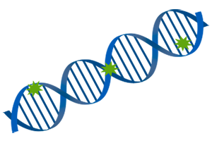 SpectraMax Quant dsDNA